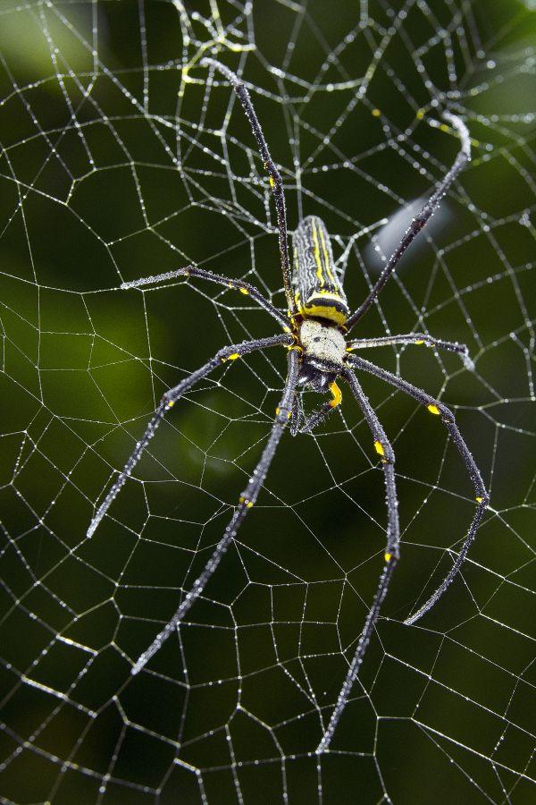 Spider house thumbnail