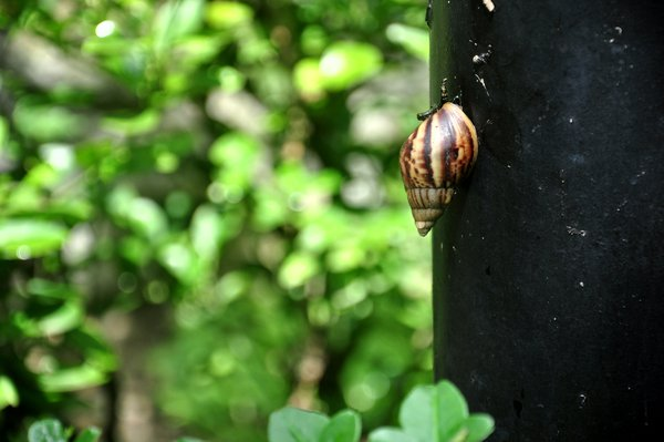 snail on the tree trunk thumbnail
