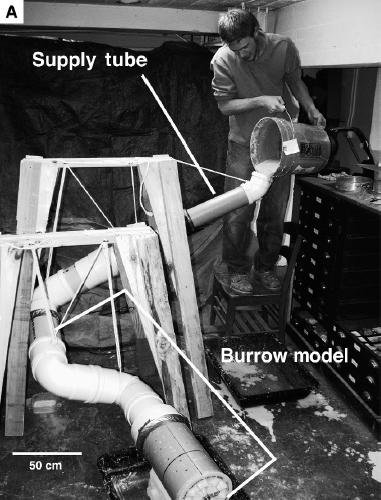 20110520083316dinosaur-burrow-experiment.jpg