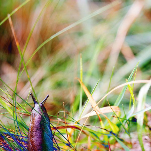 sluggadelic/looking ahead thumbnail