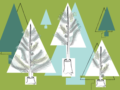 By regrowing trees from stumps, farms can produce sustainable, pesticide-free pine trees.