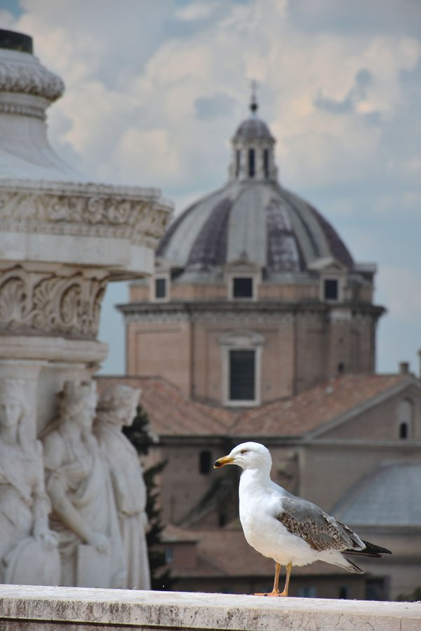 A bird in the heart of Rome's history thumbnail