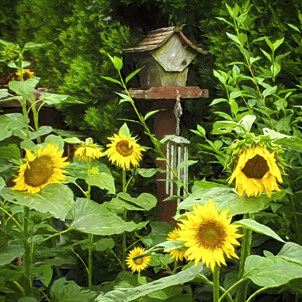 Sunflowers and Feeder thumbnail