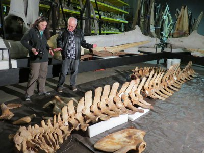 NOAA geneticist Patricia Rosel and Smithsonian marine mammal collection manager John Ososky examine the Rice's whale skeleton at the Smithsonian whale warehouse in Maryland.