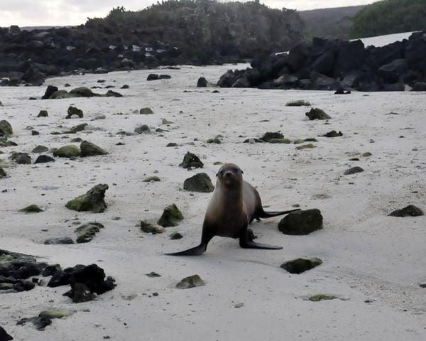 Single Seal thumbnail