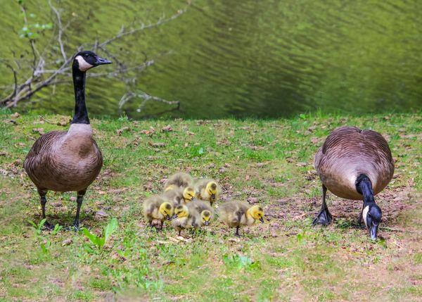 Family visit thumbnail
