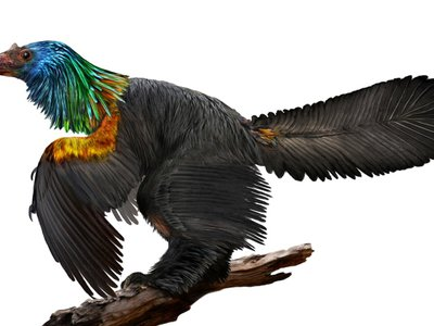 Artist's concept of Caihong, a crow-sized iridescent dinosaur from the Jurassic Period.