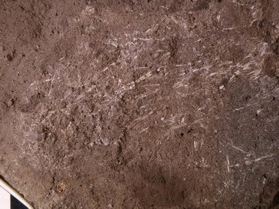Archaeologists discovered these fossilized fragments of grass deep inside South Africa's Border Cave.