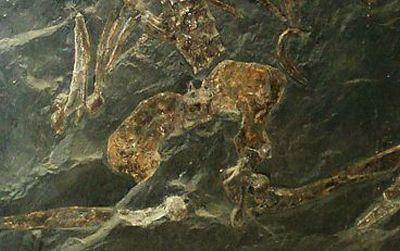 The skeleton of Oreopithecus bambolii