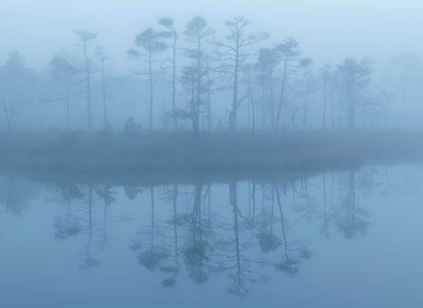 Fog thumbnail