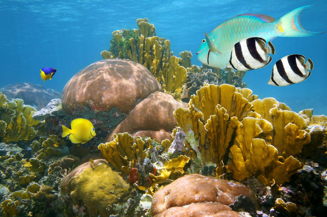Can We Create Sunscreen That Protects Both Humans and Coral Reefs?