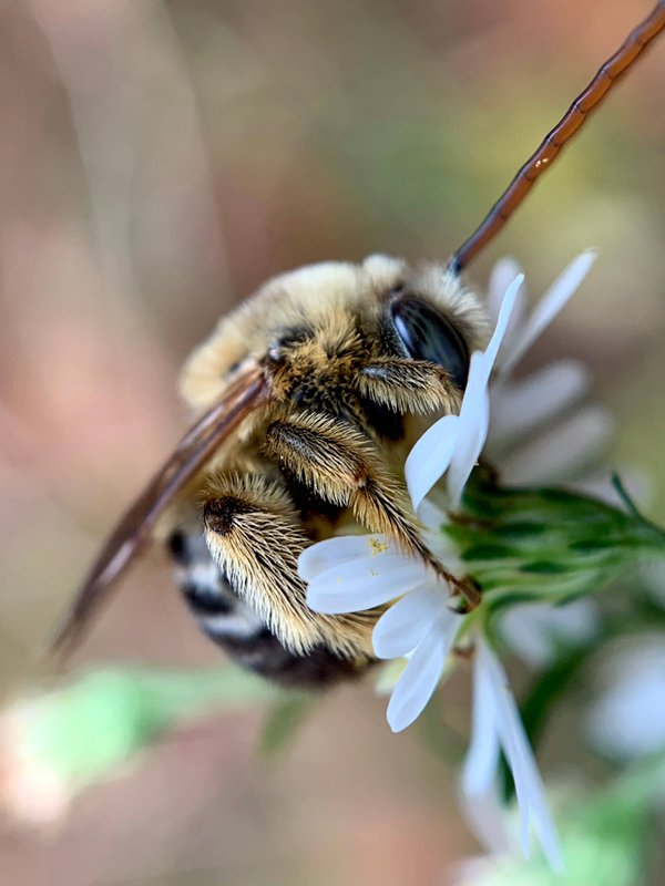 Bee exploring a flower thumbnail