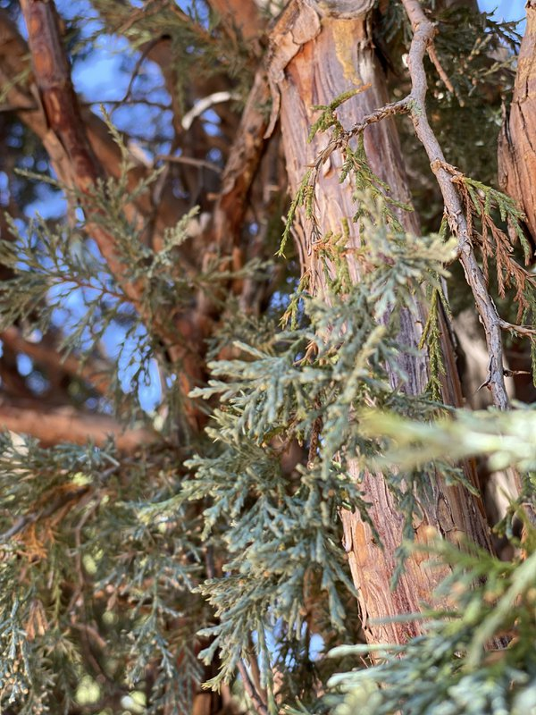 Cedar Sights thumbnail