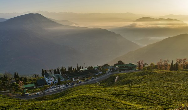 A view of Temi tea factory in the morning thumbnail