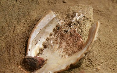 An abalone shell recovered from Blombos Cave and a grindstone covered in red ochre.