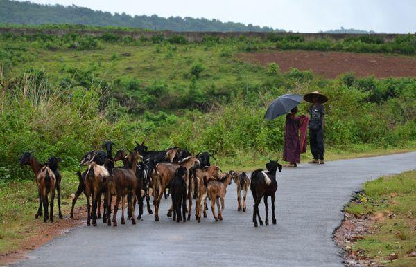 Monsoon morning thumbnail