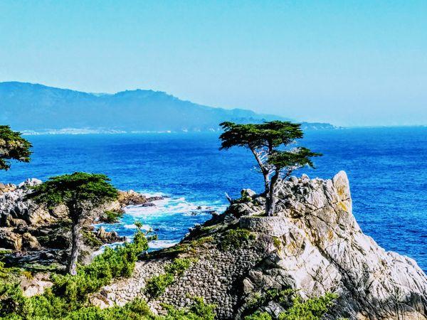 Lone Cypress thumbnail