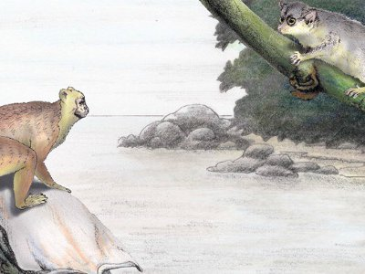 An artist's depiction of Afrotarsius (upper left) and other early primates from Africa