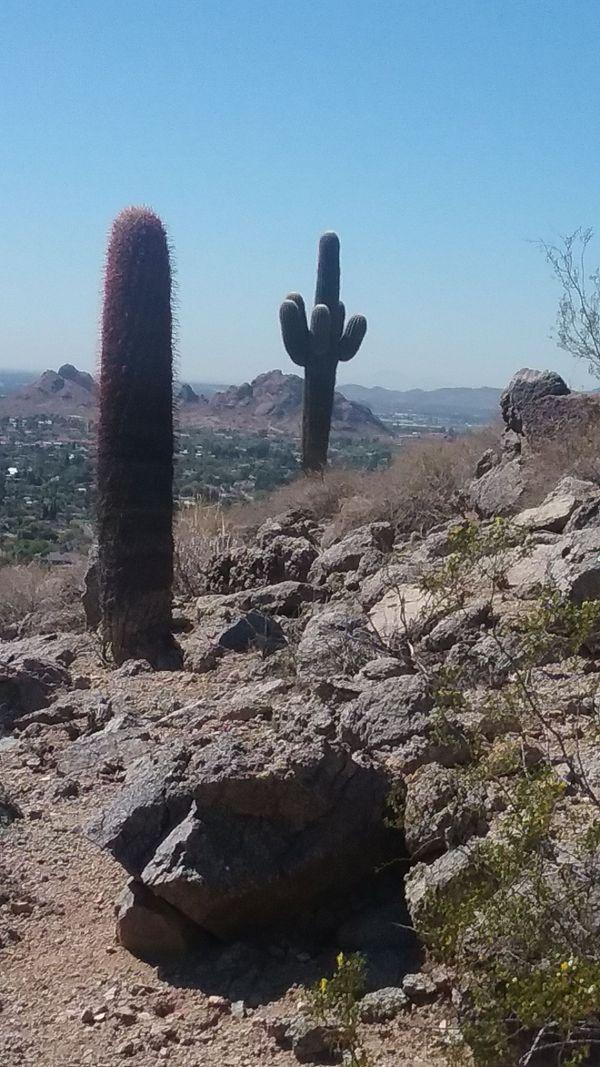 Cactus Landscape thumbnail