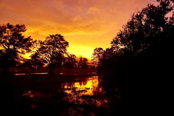Sunset inside the eye of Hurricane Zeta in New Orleans. thumbnail
