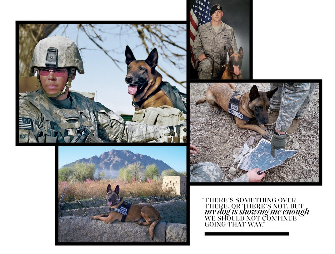 The Story of Dyngo, a War Dog Brought Home From Combat