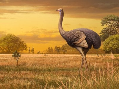 An artist's interpretation of what life could have been like if ancient humans and ancient ostriches crossed paths.