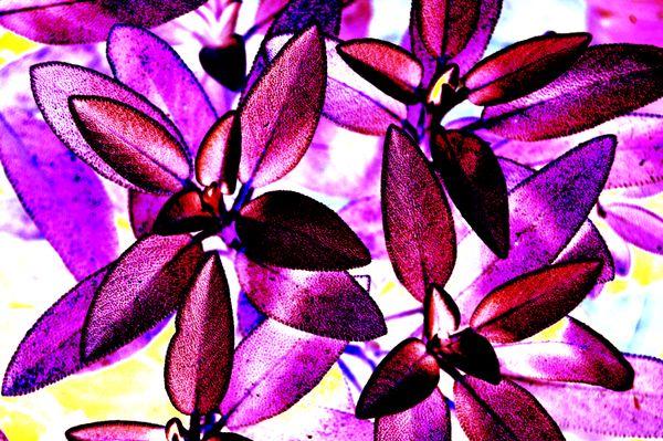 A fantasy succulent plant thumbnail