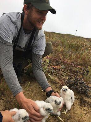 Austin, a biologist, works with endangered birds