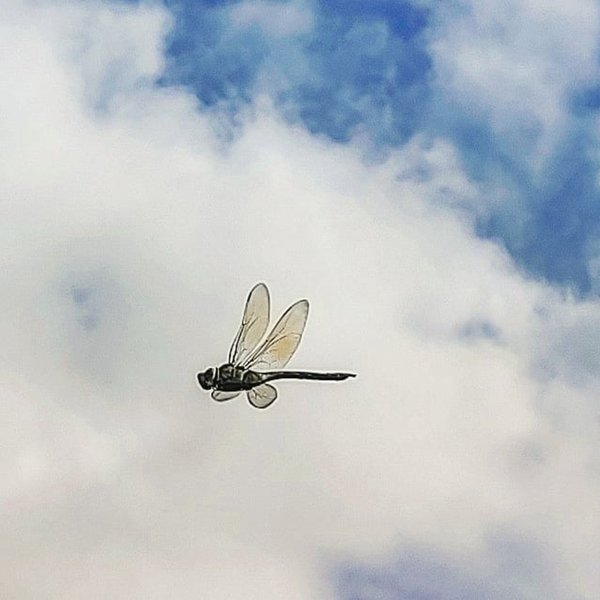Dragonfly in the sky. thumbnail