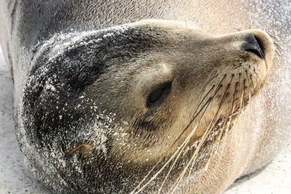 Sunbathing sea lion.  thumbnail