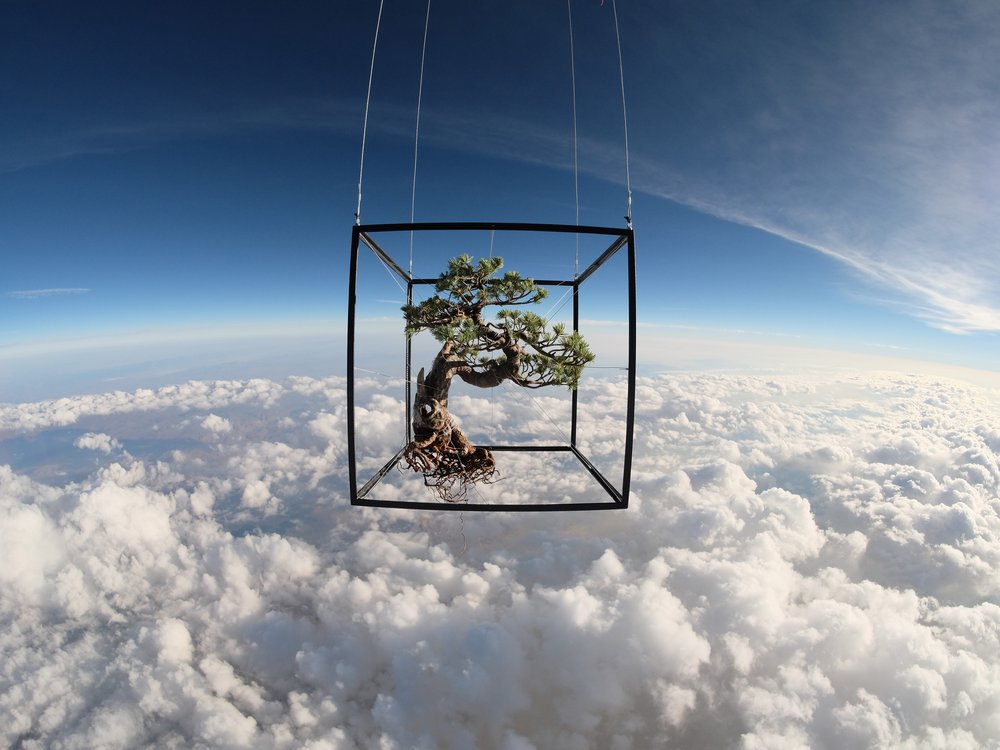 space bonsai