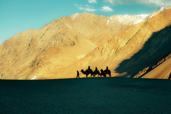 Silhouettes of tourists taking camel rides at Hundar, Nubra Valley, Ladakh thumbnail