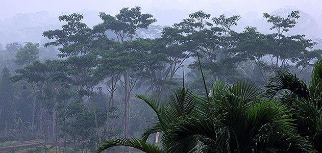 Java Island Indonesia