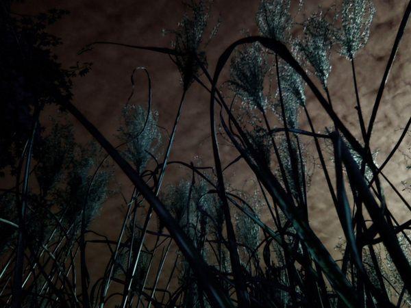 Tall Grass at Sunset thumbnail