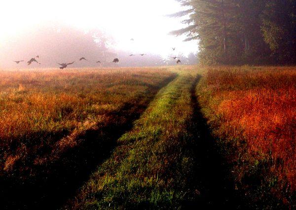 turkeys flying in field thumbnail