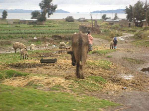 Wild meets life on the Bolivian side of Lake Titicaca. thumbnail