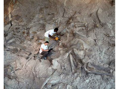 The Carnegie Quarry fossil excavation at Utah's Dinosaur National Monument has yielded more than 11 different species, including dinosaurs, such as Allosaurus, Diplodocus and Stegosaurus, as well as turtles, crocodiles and lizards.