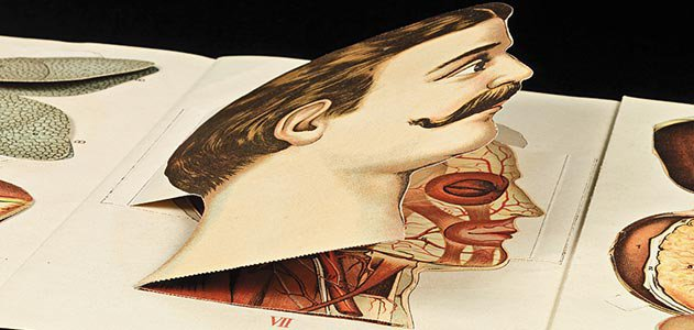 Shahzia Sikander German medical illustrations