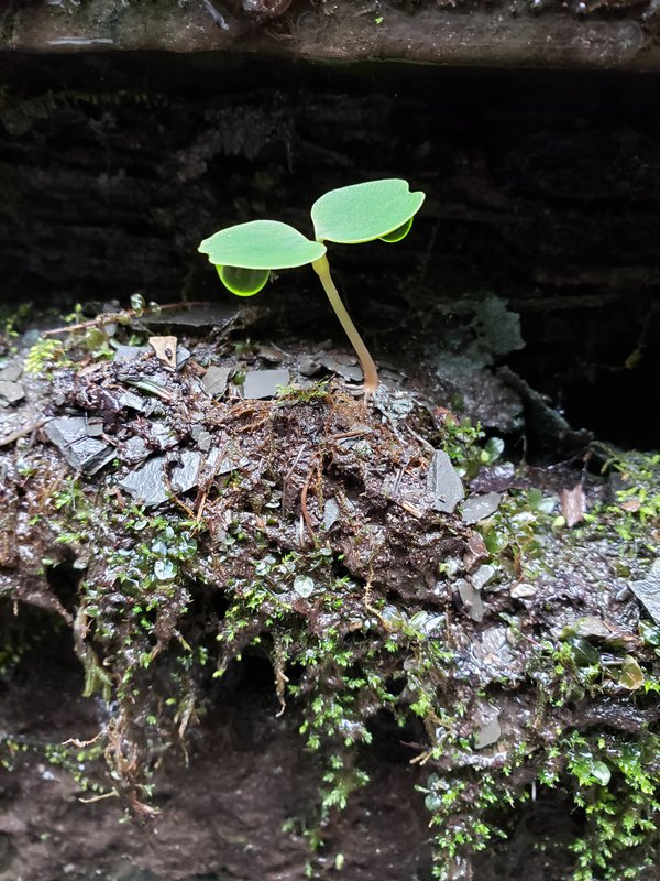 A small form of life on a rock face in Butter Milk Falls State Park Ithaca NY thumbnail