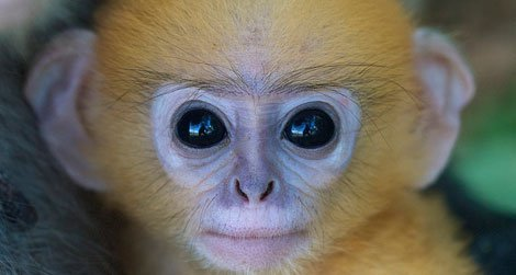 Scientists are still trying to figure out why primates have excellent vision.