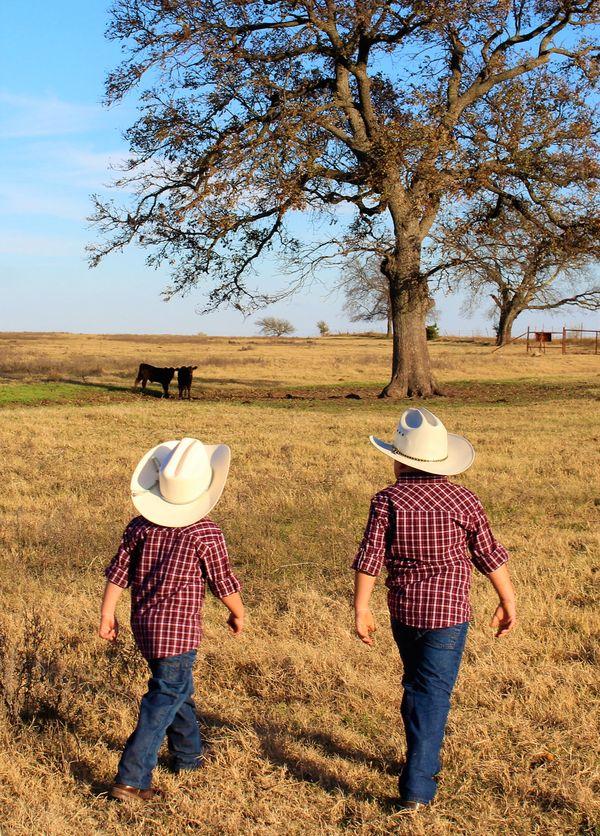 Checkin' The Calves thumbnail