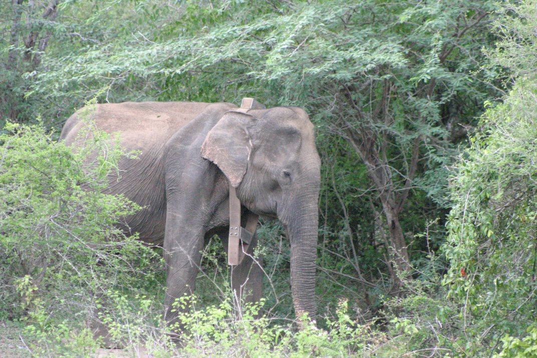 In a Horrifying New Twist, Myanmar Elephants Are Being Poached For Their Skin