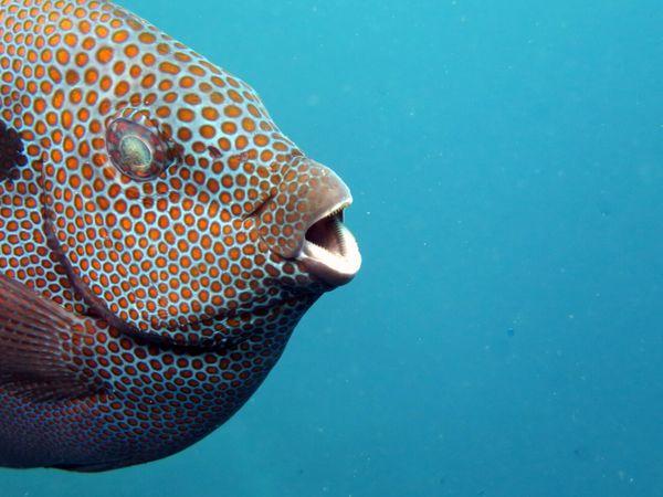 Fish head of Boracay thumbnail
