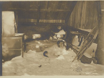 Abbott Thayer in his sleeping hut with his dog Hauskuld, circa 1903 / unidentified photographer. Nelson and Henry C. White research material, Archives of American Art, Smithsonian Institution.