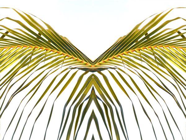 Wings thumbnail