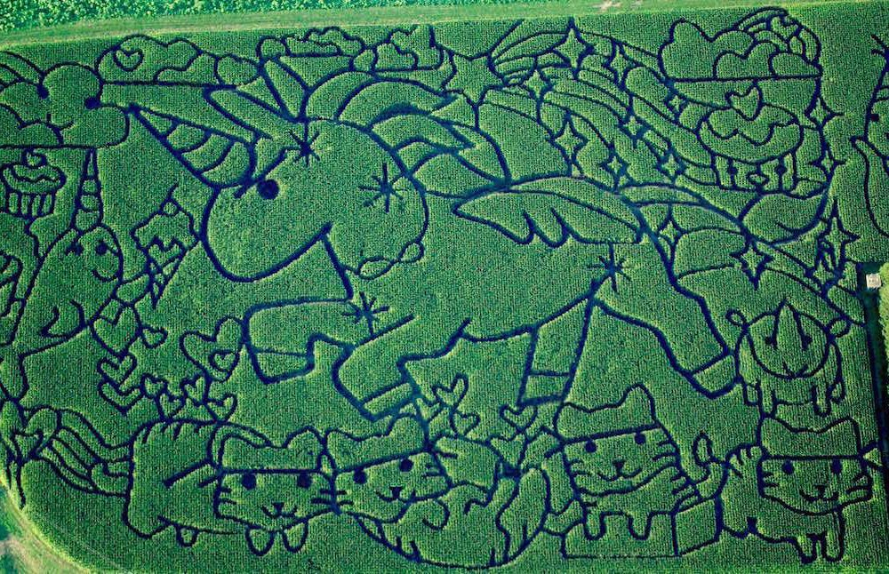 The 2016 corn maze