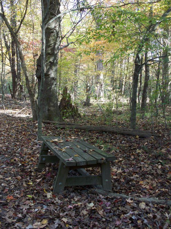 A Bench along Rock Creek Trail in Fall thumbnail