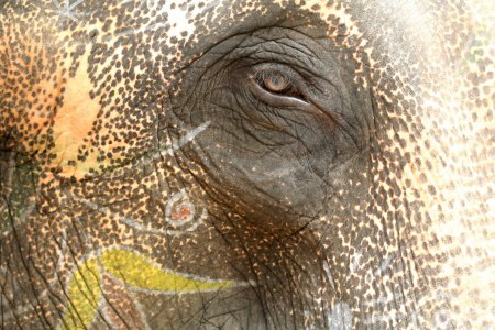 Here's looking at you by an elephant thumbnail
