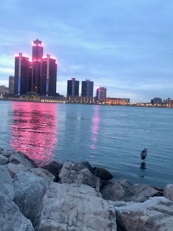 Blue Heron on Detroit River thumbnail