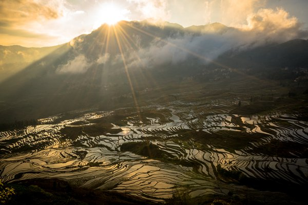 Rice Terrace Sunrise thumbnail